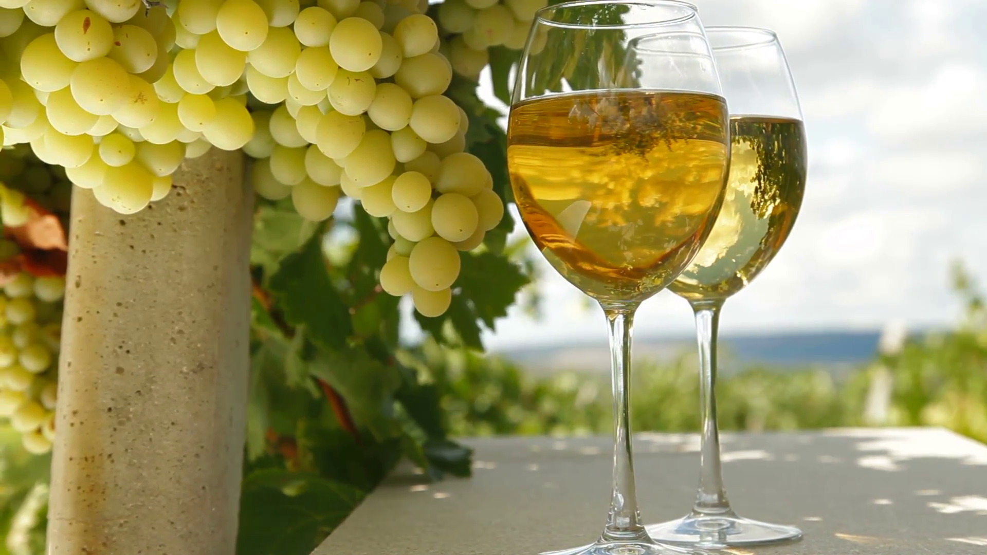 two-glasses-of-white-wine-on-the-table-and-bunch-of-muscat-white-grapes-in-vineyard-tracking-shot_4dxxntyjx__F0014